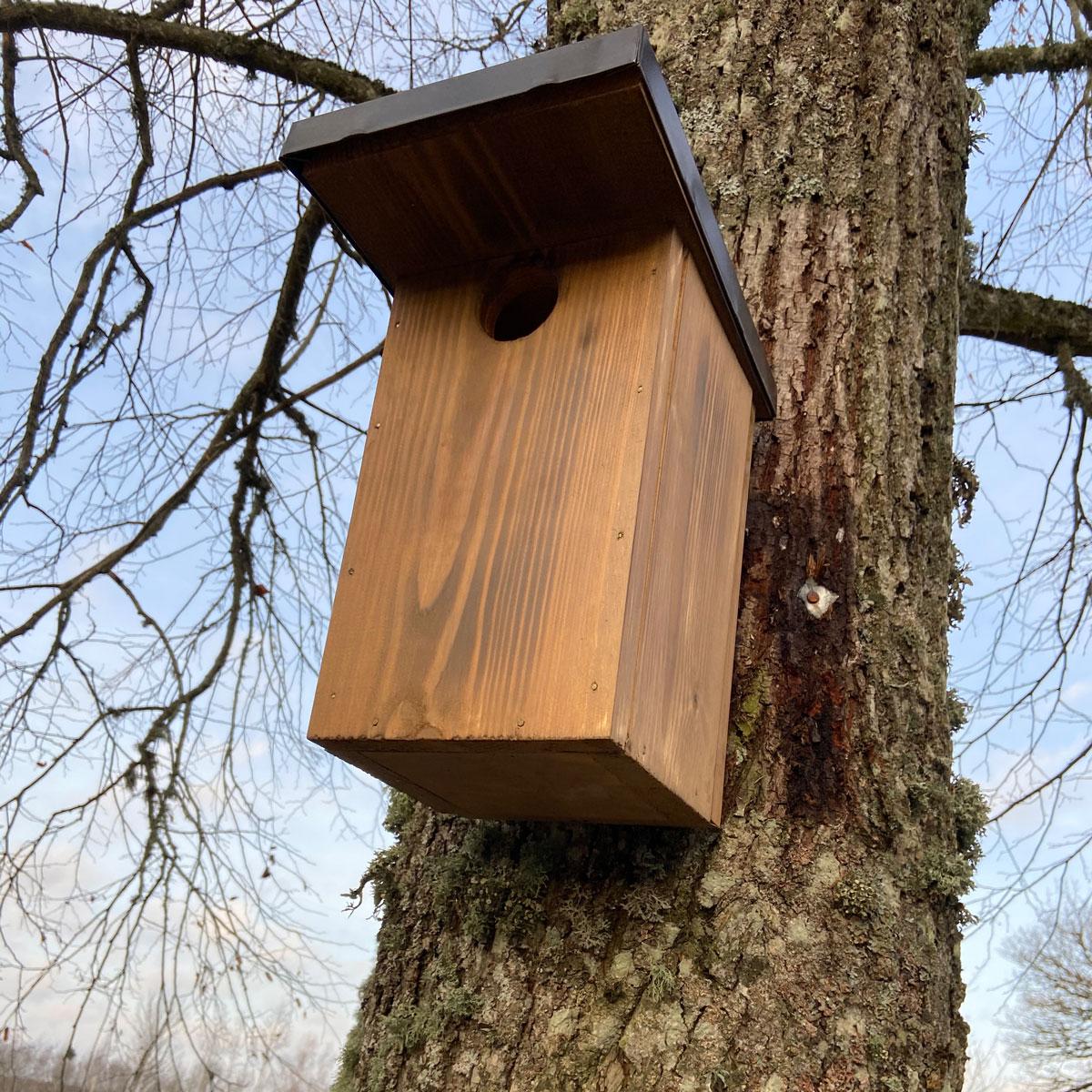 Putnu būris mājas strazdam un svīrei